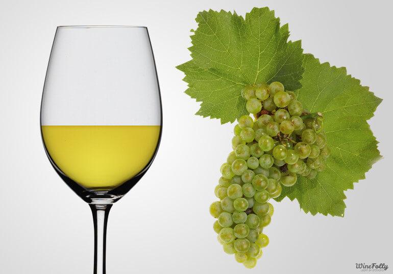 chardonnay-uva-caracetristicas-wine-folly
