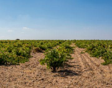 espanha-vinho-vinicola-teroirs