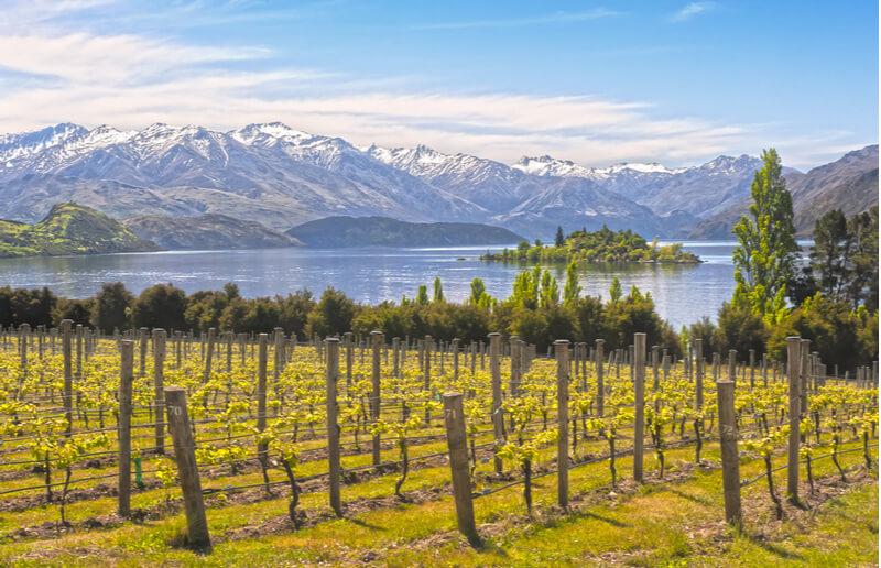 vinho-nova-zelandia-marlborought-sun